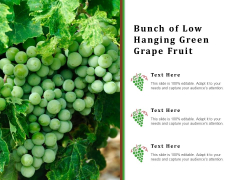 Bunch Of Low Hanging Green Grape Fruit Ppt PowerPoint Presentation Icon Professional PDF