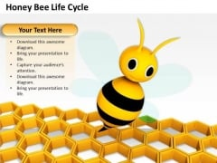 Business Development Strategy Honey Bee Life Cycle Clipart