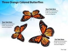 Business Plan And Strategy Three Orange Colored Butterflies Images Photos