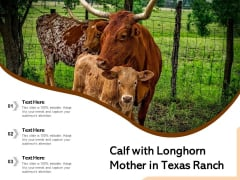 Calf With Longhorn Mother In Texas Ranch Ppt PowerPoint Presentation Infographics Example PDF