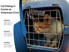 Cat Sitting In Carrier At Animal Hospital Ppt PowerPoint Presentation Slides Visuals PDF