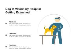Dog At Veterinary Hospital Getting Examined Ppt PowerPoint Presentation Ideas Brochure PDF