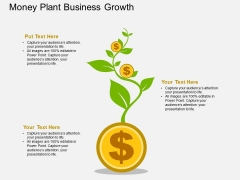Dollar Growth Money Plant Powerpoint Template