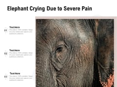 Elephant Crying Due To Severe Pain Ppt PowerPoint Presentation Icon Portfolio PDF
