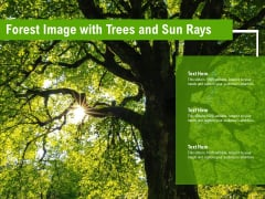 Forest Image With Trees And Sun Rays Ppt Pictures Graphics PDF