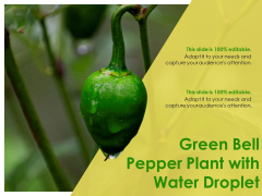 Green Bell Pepper Plant With Water Droplet Ppt PowerPoint Presentation Inspiration Graphics Template PDF