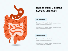 Human Body Digestive System Structure Ppt PowerPoint Presentation Icon Slide PDF