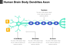 Human Brain Body Dendrites Axon Ppt PowerPoint Presentation Pictures Background Image PDF