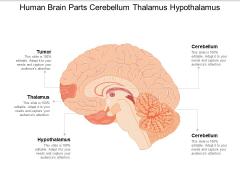 Human Brain Parts Cerebellum Thalamus Hypothalamus Ppt Powerpoint Presentation Slides