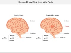 Human Brain Structure With Parts Ppt Powerpoint Presentation Gallery Design Ideas