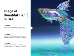 Image Of Beautiful Fish In Sea Ppt PowerPoint Presentation Pictures Professional