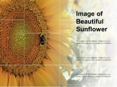 Image Of Beautiful Sunflower Ppt PowerPoint Presentation Pictures Slide Download