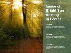 Image Of Bright Sun Shining In Forest Ppt PowerPoint Presentation Slides Layout