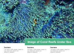 Image Of Coral Reefs Under Sea Ppt PowerPoint Presentation Icon Skills