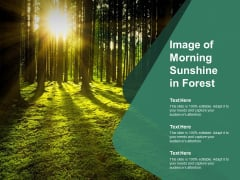 Image Of Morning Sunshine In Forest Ppt PowerPoint Presentation Inspiration Slide Download