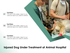Injured Dog Under Treatment At Animal Hospital Ppt PowerPoint Presentation Infographics Skills PDF