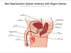 Men Reproductive System Anatomy With Organs Names Ppt PowerPoint Presentation File Example PDF