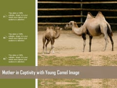 Mother In Captivity With Young Camel Image Ppt PowerPoint Presentation Gallery Display PDF