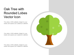 Oak Tree With Rounded Lobes Vector Icon Ppt PowerPoint Presentation Show Rules PDF