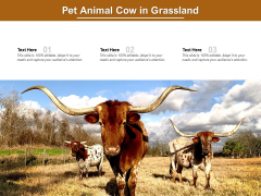 Pet Animal Cow In Grassland Ppt PowerPoint Presentation Icon Graphics Template PDF