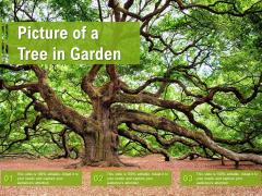 Picture Of A Tree In Garden Ppt Portfolio Background Designs PDF