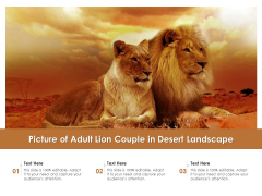 Picture Of Adult Lion Couple In Desert Landscape Ppt PowerPoint Presentation File Ideas PDF