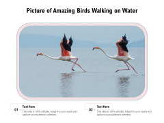Picture Of Amazing Birds Walking On Water Ppt PowerPoint Presentation File Inspiration PDF