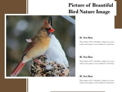 Picture Of Beautiful Bird Nature Image Ppt PowerPoint Presentation Infographic Template Aids PDF