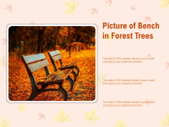 Picture Of Bench In Forest Trees Ppt PowerPoint Presentation Visuals