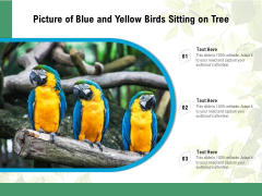 Picture Of Blue And Yellow Birds Sitting On Tree Ppt PowerPoint Presentation File Guidelines PDF
