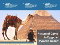 Picture Of Camel In Egyptian Pyramid Desert Ppt PowerPoint Presentation Gallery Gridlines PDF
