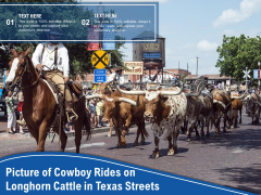 Picture Of Cowboy Rides On Longhorn Cattle In Texas Streets Ppt PowerPoint Presentation Outline Display PDF