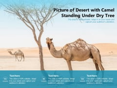 Picture Of Desert With Camel Standing Under Dry Tree Ppt PowerPoint Presentation Gallery Summary PDF