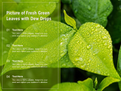 Picture Of Fresh Green Leaves With Dew Drops Ppt PowerPoint Presentation Layouts Deck PDF
