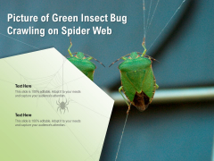 Picture Of Green Insect Bug Crawling On Spider Web Ppt PowerPoint Presentation Layouts Example PDF