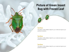 Picture Of Green Insect Bug With Frozen Leaf Ppt PowerPoint Presentation Infographics Example PDF
