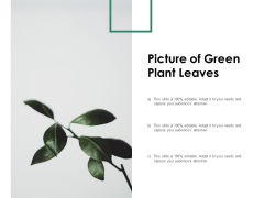 Picture Of Green Plant Leaves Ppt PowerPoint Presentation Model Background Images