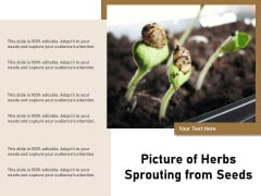 Picture Of Herbs Sprouting From Seeds Ppt PowerPoint Presentation Slides Portrait PDF