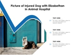 Picture Of Injured Dog With Elizabethan In Animal Hospital Ppt PowerPoint Presentation Inspiration Graphics Tutorials PDF