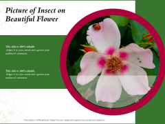 Picture Of Insect On Beautiful Flower Ppt PowerPoint Presentation Pictures Slides PDF