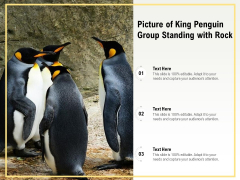 Picture Of King Penguin Group Standing With Rock Ppt PowerPoint Presentation File Portfolio PDF