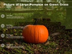 Picture Of Large Pumpkin On Green Grass Ppt PowerPoint Presentation File Samples PDF