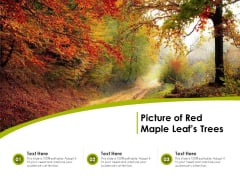 Picture Of Red Maple Leafs Trees Ppt PowerPoint Presentation Icon Infographics PDF