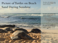 Picture Of Turtles On Beach Sand During Sunshine Ppt PowerPoint Presentation Styles Demonstration PDF
