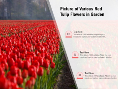 Picture Of Various Red Tulip Flowers In Garden Ppt PowerPoint Presentation Gallery Slides PDF