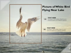 Picture Of White Bird Flying Near Lake Ppt PowerPoint Presentation Gallery Gridlines PDF