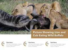 Picture Showing Lion And Cub Eating Wild Buffalo Ppt PowerPoint Presentation Outline Graphics Example PDF