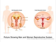 Picture Showing Men And Women Reproductive System Ppt PowerPoint Presentation Gallery Pictures PDF