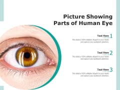 Picture Showing Parts Of Human Eye Ppt PowerPoint Presentation Infographic Template Graphic Tips PDF