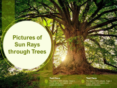 Pictures Of Sun Rays Through Trees Ppt Gallery Infographic Template PDF
